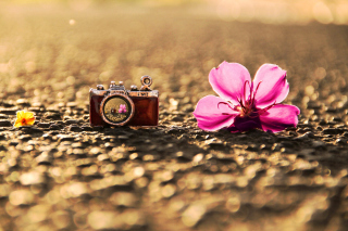 Macro Camera and Flower - Obrázkek zdarma pro Samsung Galaxy S II 4G
