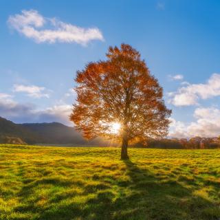 Autumn Sun Rays - Obrázkek zdarma pro iPad 2