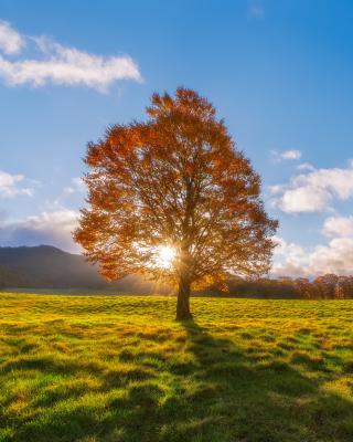 Autumn Sun Rays - Obrázkek zdarma pro Nokia Asha 503