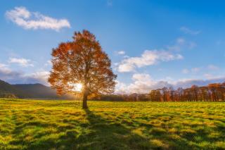 Autumn Sun Rays - Obrázkek zdarma pro Samsung Galaxy S6 Active