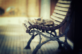 Cat Sleeping On Bench Background for Android, iPhone and iPad
