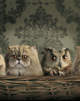 Cats and Owl as Third Wheel - Fondos de pantalla gratis para Huawei G7300