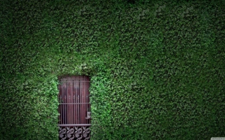 Green Wall And Secret Door Wallpaper for Android, iPhone and iPad