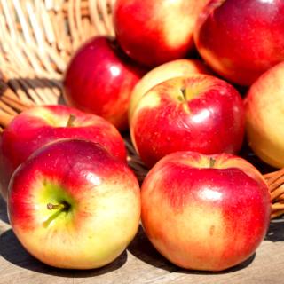 Autumn Apples - Obrázkek zdarma pro 208x208