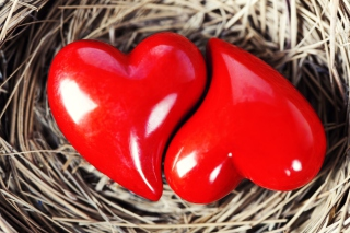 Heart In Nest sfondi gratuiti per cellulari Android, iPhone, iPad e desktop