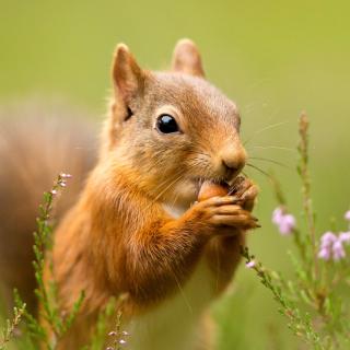 Squirrel Dinner - Obrázkek zdarma pro 128x128
