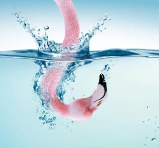 Flamingo Underwater - Obrázkek zdarma pro iPad mini 2
