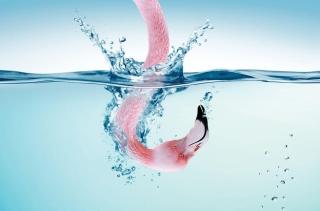 Flamingo Underwater - Obrázkek zdarma pro HTC Desire 310