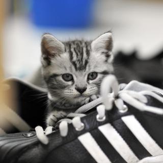 Kitten with shoes - Obrázkek zdarma pro 128x128