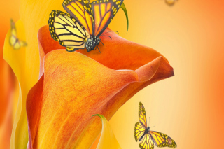 Beautiful Flower - Obrázkek zdarma pro LG P970 Optimus