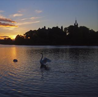 Swan Lake At Sunset - Obrázkek zdarma pro 320x320