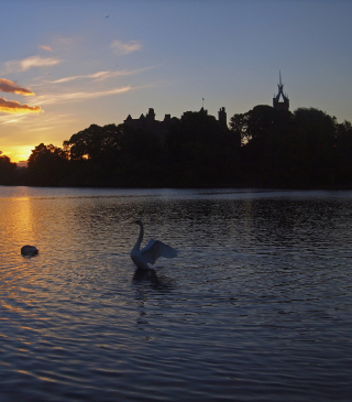 Swan Lake At Sunset - Obrázkek zdarma pro Nokia C2-00