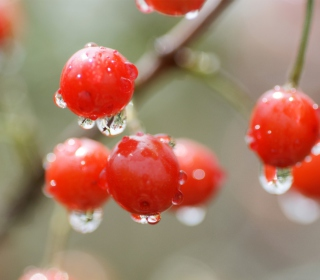 Waterdrops On Cherries - Obrázkek zdarma pro 1024x1024