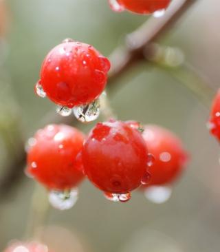 Waterdrops On Cherries - Obrázkek zdarma pro Nokia Asha 203