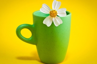Free Flower Cup Picture for Android, iPhone and iPad