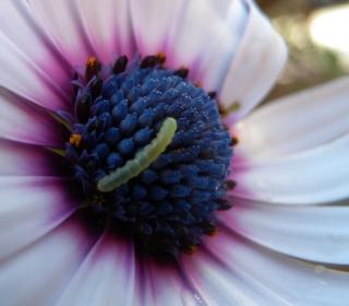 Caterpillar On Flower - Obrázkek zdarma pro 320x320