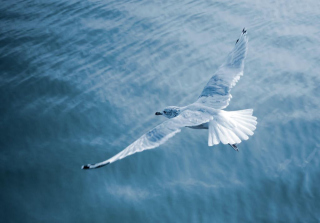 Seagull Wallpaper for Android, iPhone and iPad