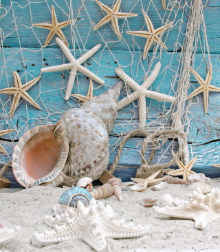 Seashells - Obrázkek zdarma pro 240x400
