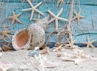 Seashells - Obrázkek zdarma pro Nokia X5-01
