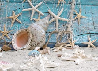 Seashells - Obrázkek zdarma pro HTC EVO 4G