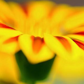 Macro photo of flower petals - Obrázkek zdarma pro 1024x1024