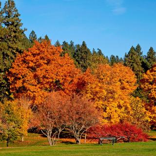 Autumn trees in reserve - Obrázkek zdarma pro 1024x1024
