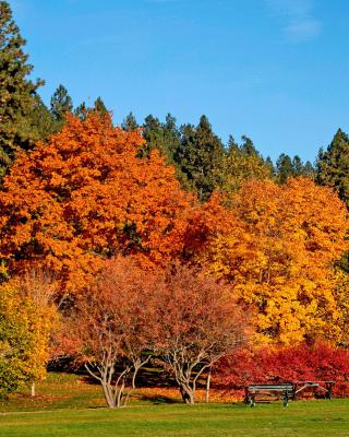 Autumn trees in reserve - Obrázkek zdarma pro Nokia Asha 309