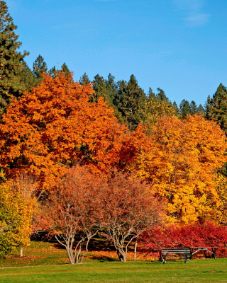 Autumn trees in reserve - Obrázkek zdarma pro Nokia Lumia 625