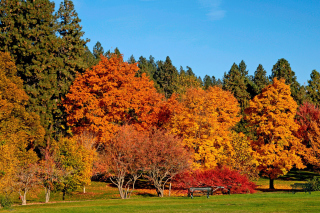 Autumn trees in reserve Picture for Android, iPhone and iPad