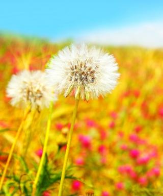 Spring Dandelions - Obrázkek zdarma pro Nokia Asha 306