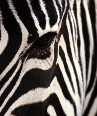 Zebra - Obrázkek zdarma pro Nokia Asha 303