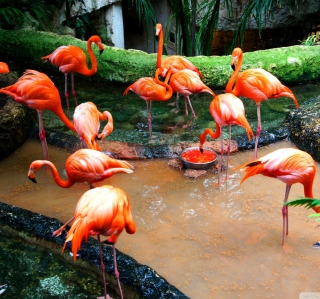Pink Flamingo - Obrázkek zdarma pro iPad mini 2