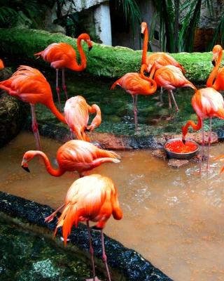 Pink Flamingo - Obrázkek zdarma pro Nokia 206 Asha