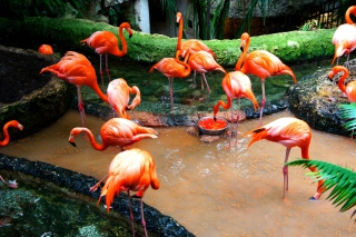 Pink Flamingo - Obrázkek zdarma pro Samsung Galaxy Note 2 N7100