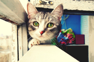 Cat Walking Background for Android, iPhone and iPad
