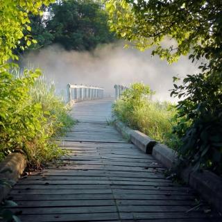 Misty path in park - Obrázkek zdarma pro 2048x2048