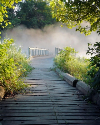 Misty path in park - Obrázkek zdarma pro Nokia 206 Asha