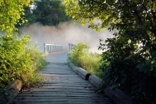 Misty path in park - Obrázkek zdarma pro Android 540x960