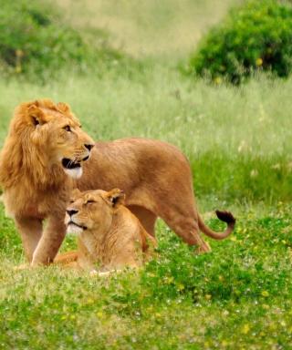 Lion Couple - Obrázkek zdarma pro Nokia X2
