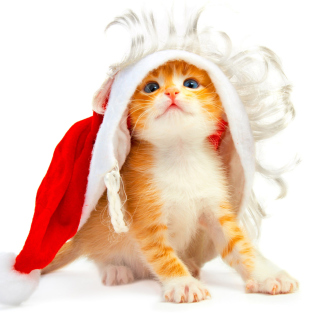 Cat Wanna Be Santa - Obrázkek zdarma pro iPad mini 2