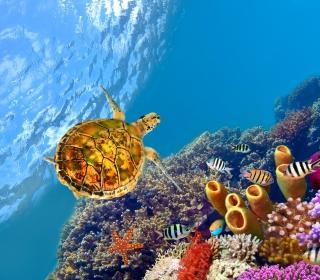 Red Sea Turtle - Obrázkek zdarma pro 320x320