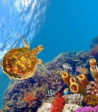 Red Sea Turtle - Obrázkek zdarma pro 176x220