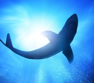 Big Shark - Obrázkek zdarma pro 128x128