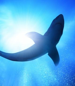 Big Shark - Obrázkek zdarma pro iPhone 4S